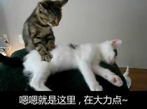 宠物萌图一组
