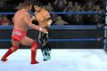 WWF世界摔跤联盟