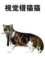 视觉错猫猫