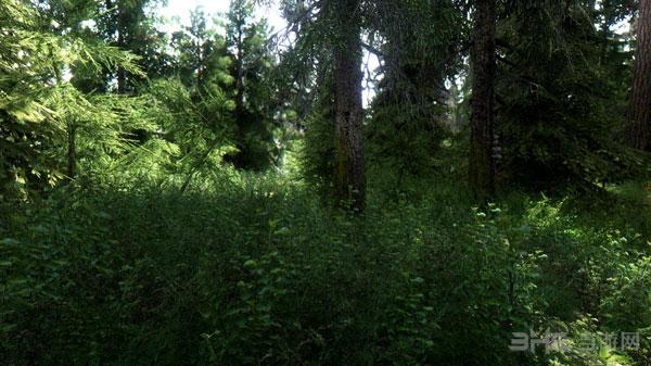 壁纸 风景 森林 桌面 600_337
