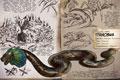 方舟生存进化生物官方图鉴大全(持续更新中)