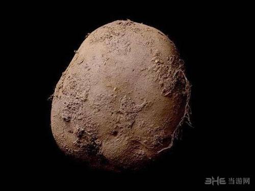土豆照片1
