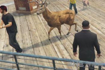 侠盗猎车手5更多的宠物MOD截图2