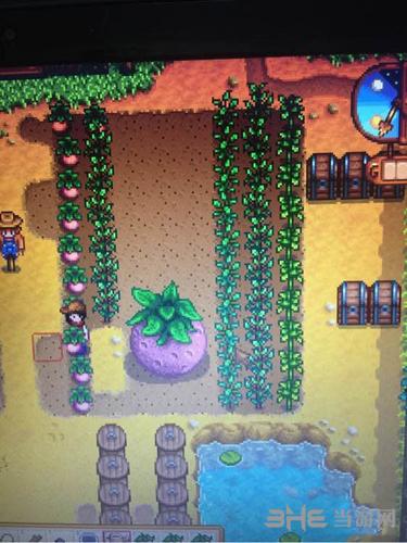 星露谷物语怎么种植与收获巨型植物详细攻略1