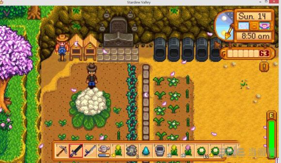 星露谷物语怎么种植与收获巨型植物详细攻略2