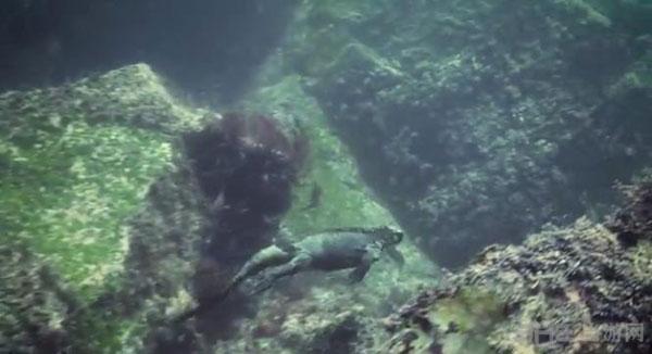现实版哥斯拉现身太平洋5