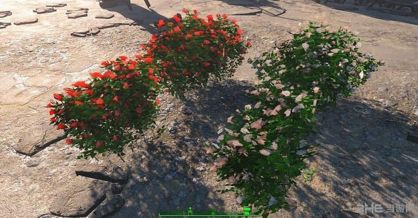 辐射4花园植物农作物种植工作台MOD截图1