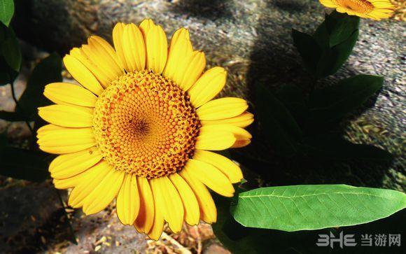 上古卷轴5天际更多的花朵MOD截图0