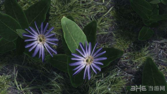 上古卷轴5天际更多的花朵MOD截图2