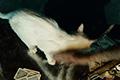 《幽灵行动:荒野》搞笑真人宣传片 反派死于爱猫