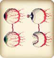 双子魔眼截图1