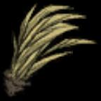 饥荒树苗图片15