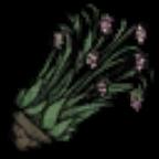 饥荒树苗图片11