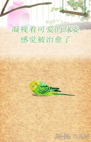 治愈的鹦鹉育成游戏