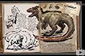 方舟生存进化羽暴龙怎么驯服 方舟生存进化