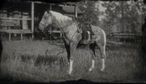 美国标准血种马