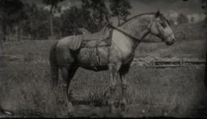 西班牙纯种马