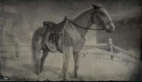 比利时役用马