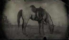 荷兰温血马