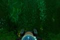 深海迷航海藻森林在哪 美丽水世界海藻区海底世界地图介绍