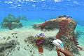 深海迷航安全区在哪 美丽水世界安全区海底世界地图介绍