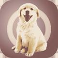 人狗交流器app