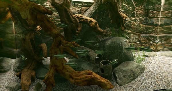 鱼缸模拟器截图2