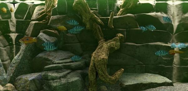 鱼缸模拟器截图3