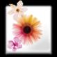 金石影楼管理软件下载