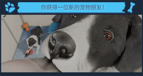 《Dog Trainer》官方介绍