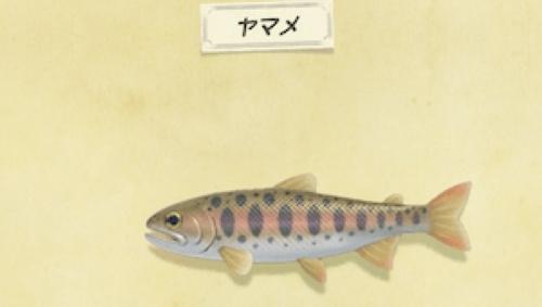 动物森友会樱花鱼图片