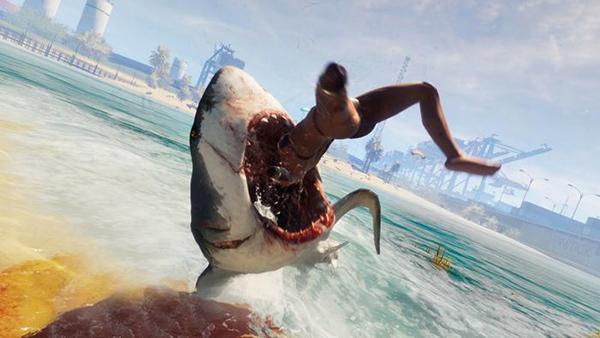 食人鲨图片